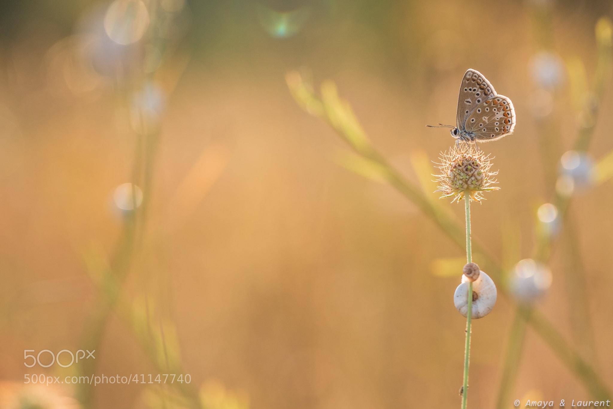 Photograph Bokeh snail by Amaya Bercetche on 500px