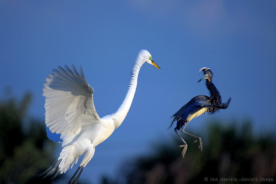 Photograph Territory Battle. by Lee Daniels on 500px