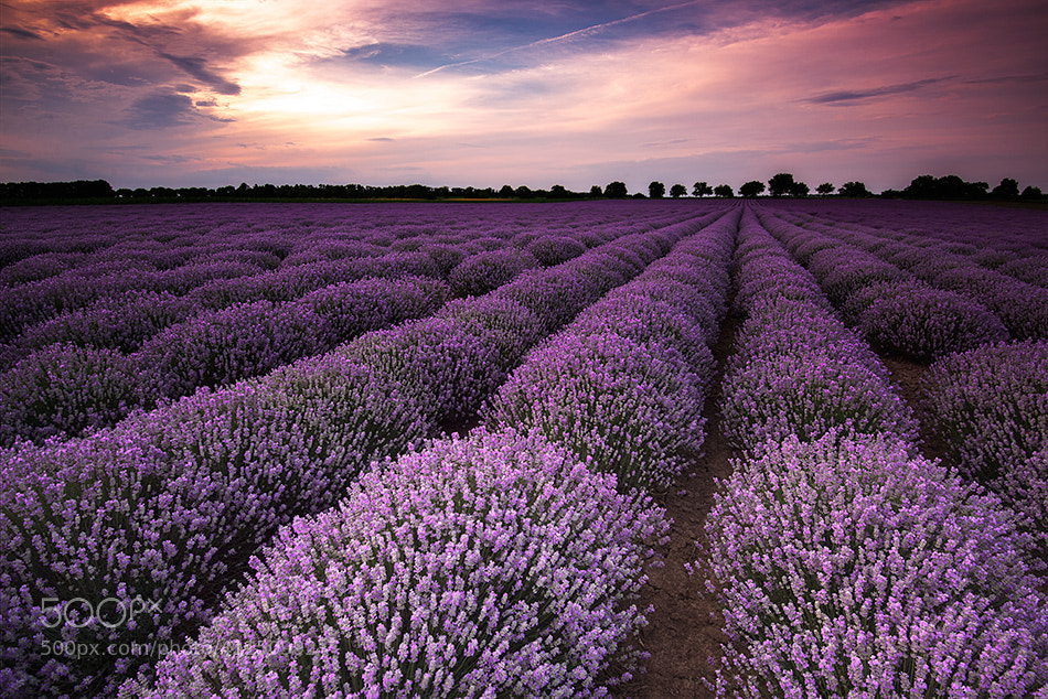 Photograph Lavender fields by Evgeni Ivanov on 500px