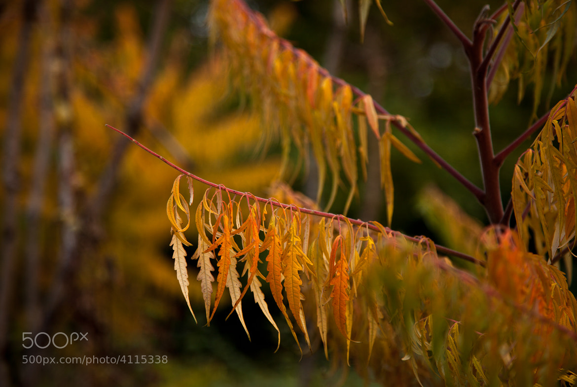 Photograph Dancing in the wind by Gabriela Mello on 500px