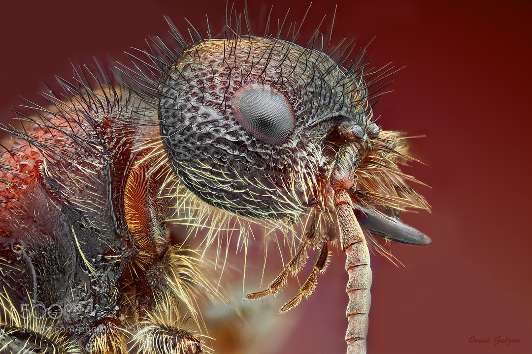 Photograph Fashion Ant2 by Omid Golzar on 500px