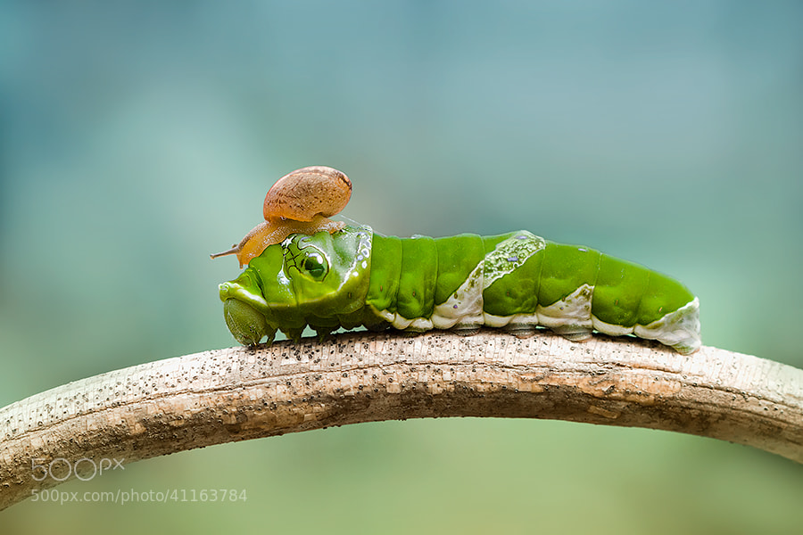 Photograph larva and snail *** by  Hendy Mp on 500px