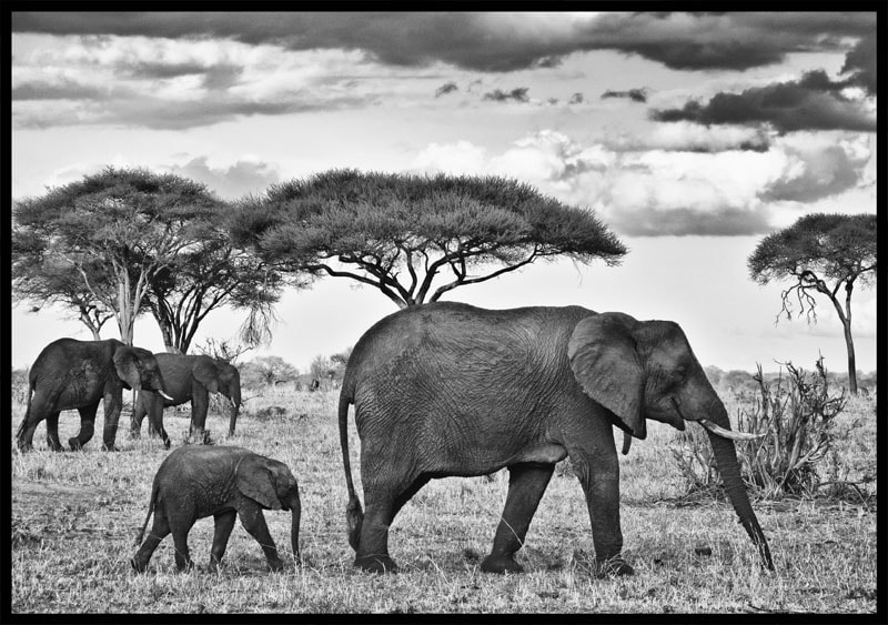 Photograph Follow the Leader by Mike Hagen on 500px