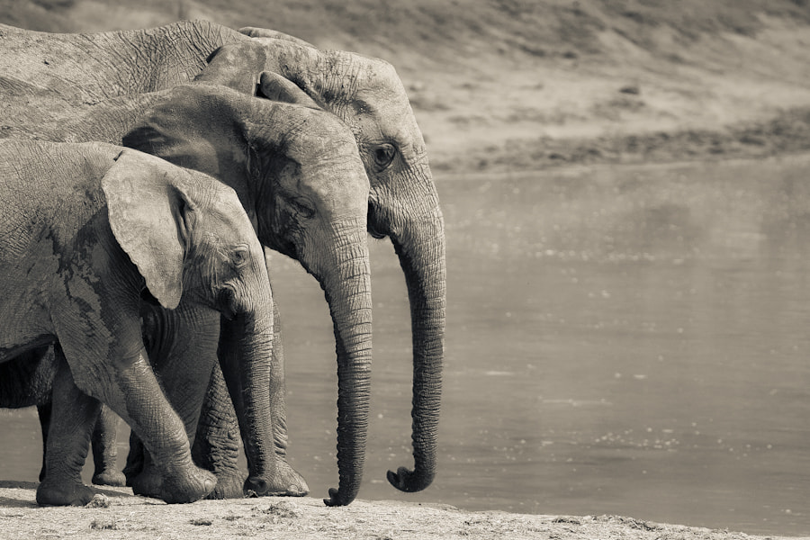 Photograph 3 Elephants by Mario Moreno on 500px