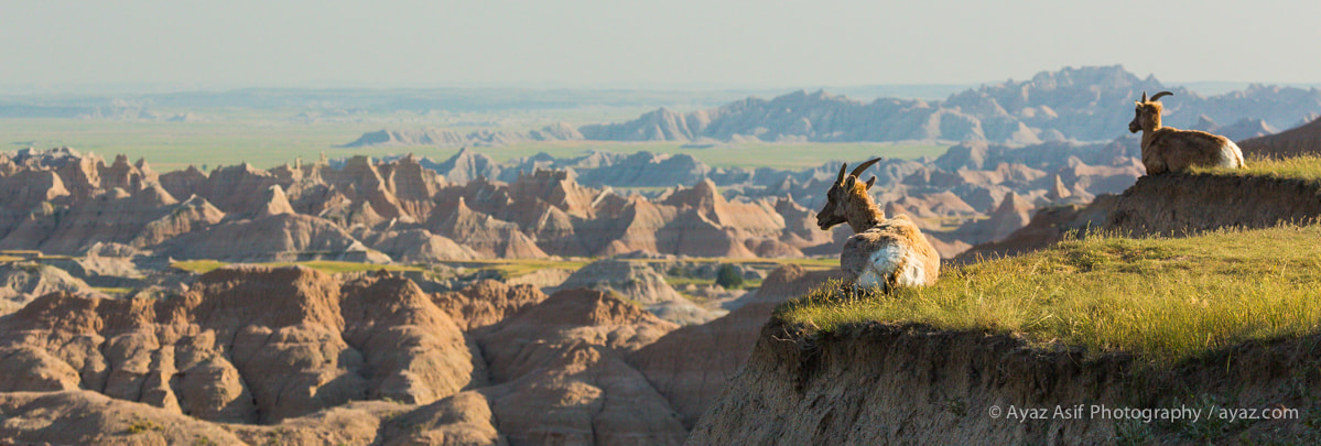 Photograph Badlands Mountain Goats by Ayaz Asif on 500px