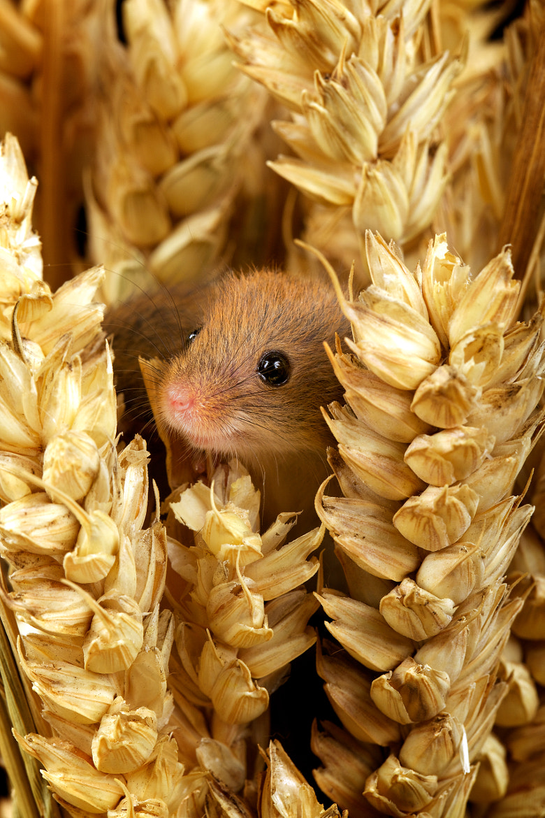 Photograph tiny tim by Mark Bridger on 500px