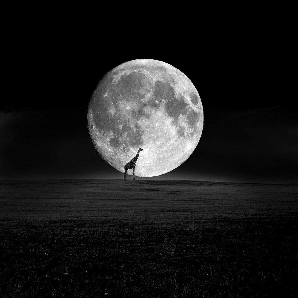 Photograph full moon by F Luu on 500px