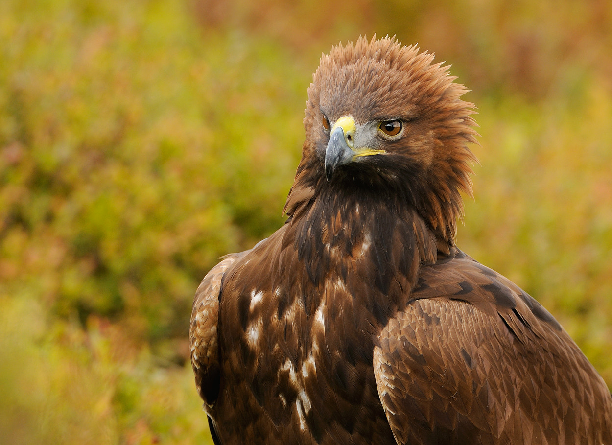 Photograph Beautiful Golden Lady by Harry  Eggens on 500px