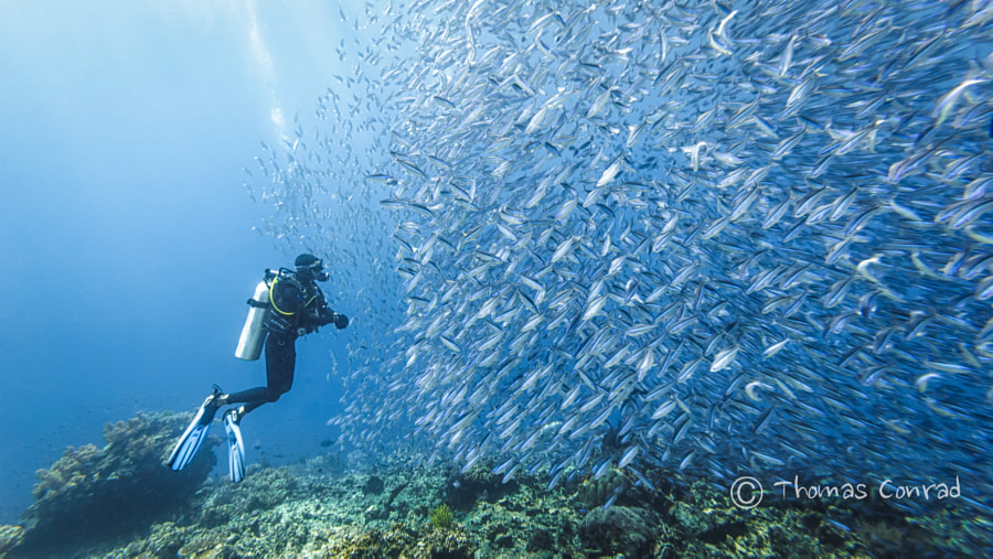 Photograph Got some Fish by Thomas Conrad on 500px