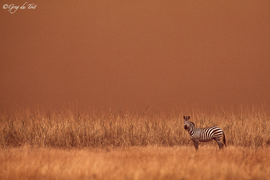 Photograph African Sand Storm by greg du toit on 500px