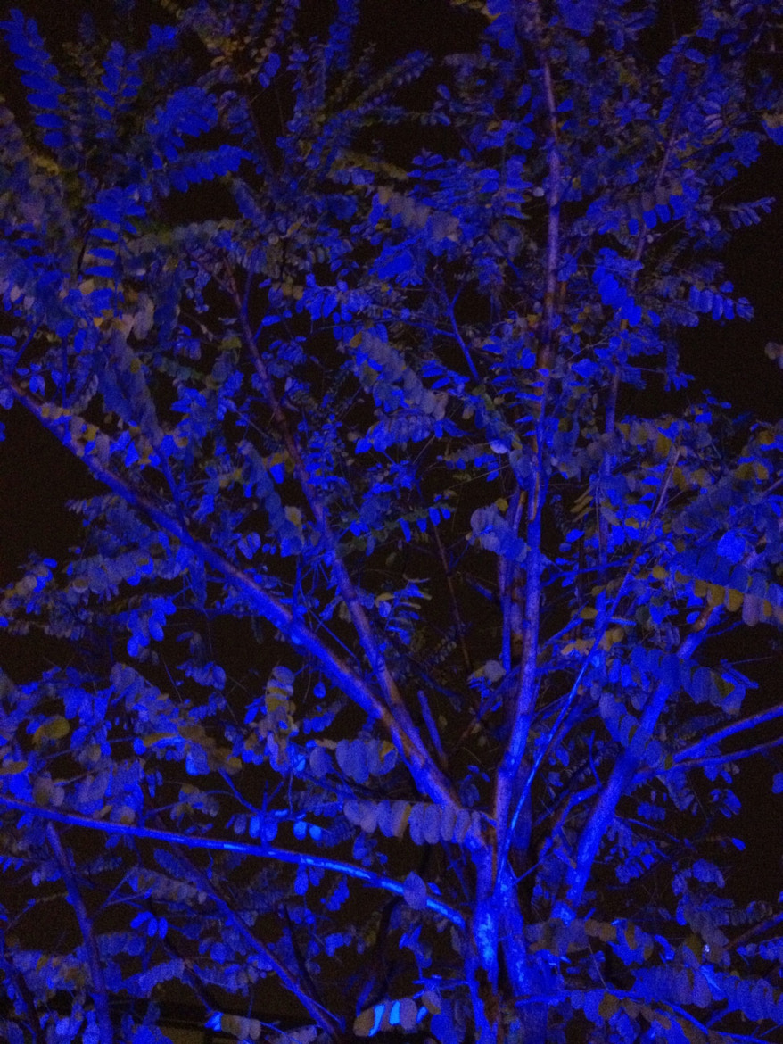 Photograph Blue by Gangrenous Green on 500px