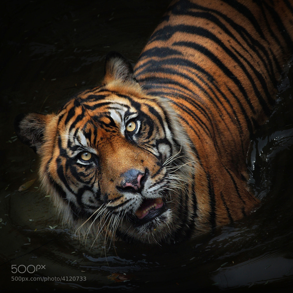 Photograph intense by Irawan Subingar on 500px