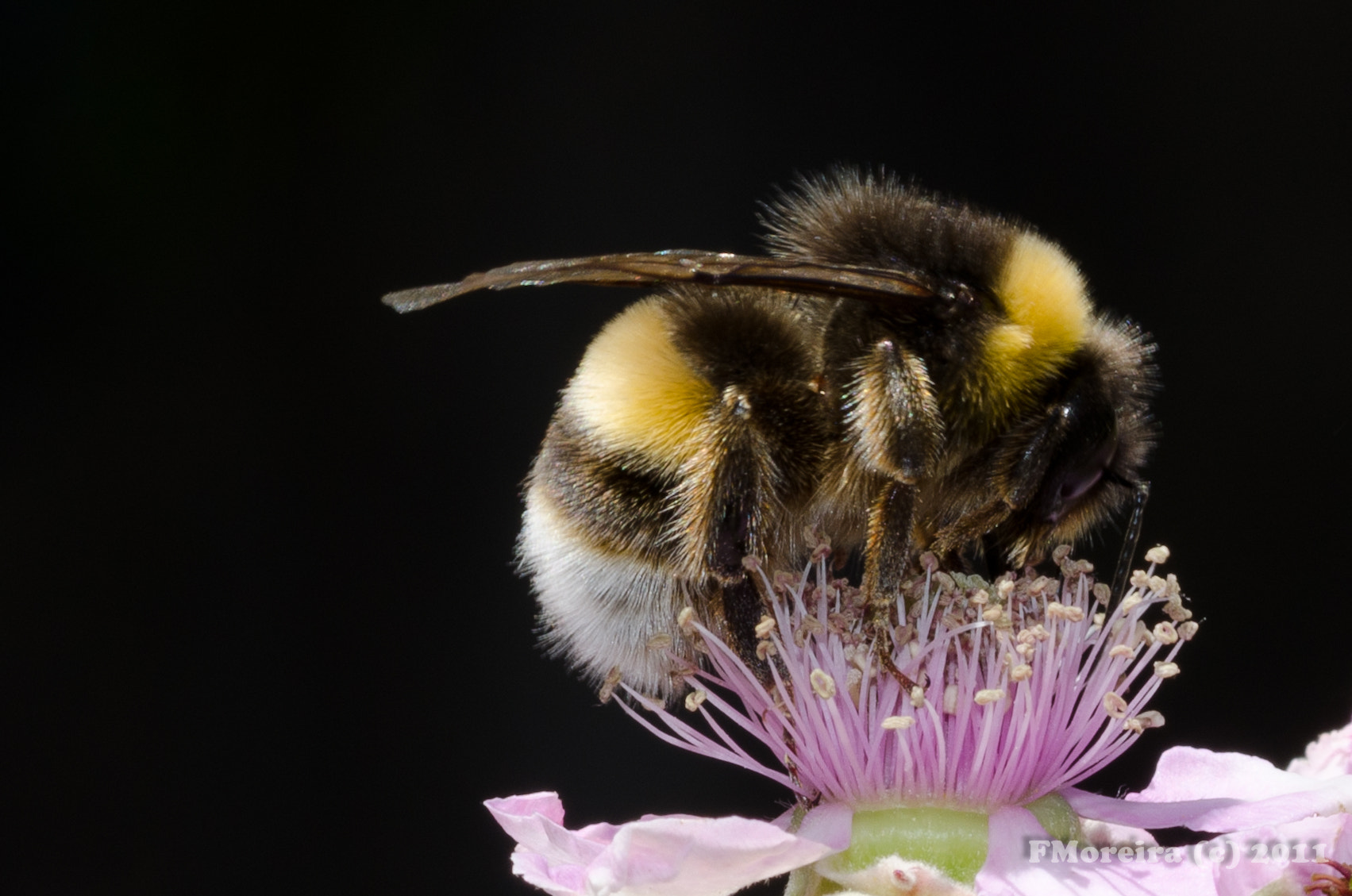 Photograph Busy Bee by Fernando Moreira on 500px