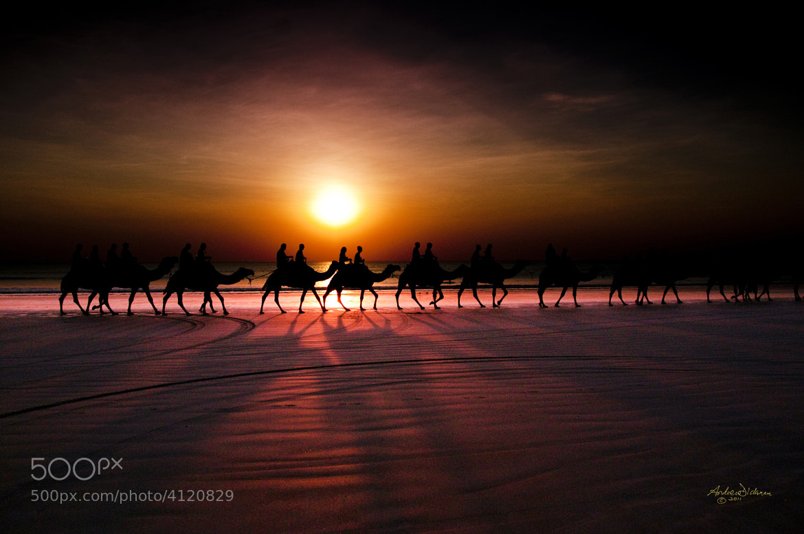 Photograph Shadow camels by Lord Veritas on 500px