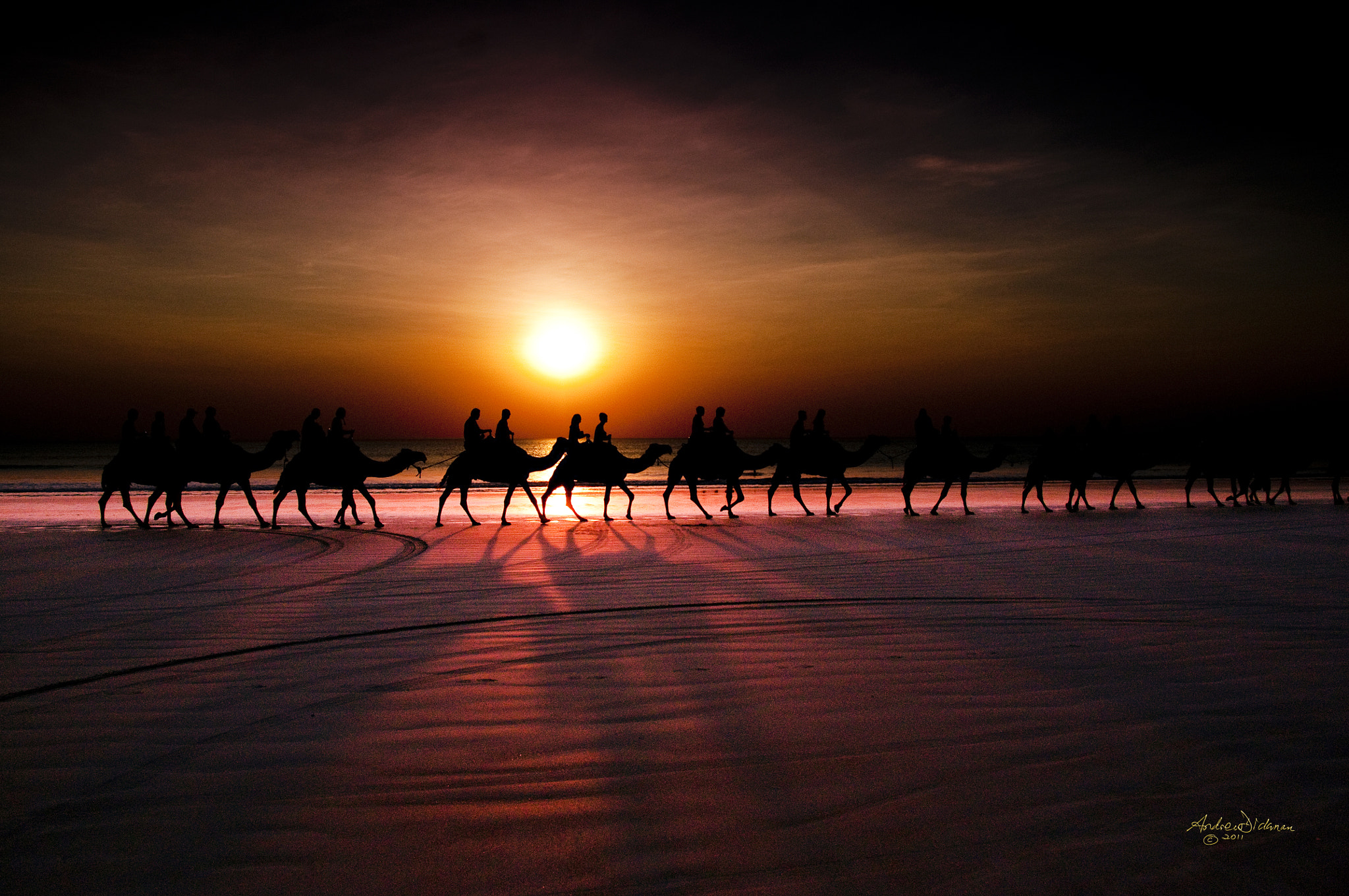 Photograph Shadow camels by Andrew Dickman on 500px