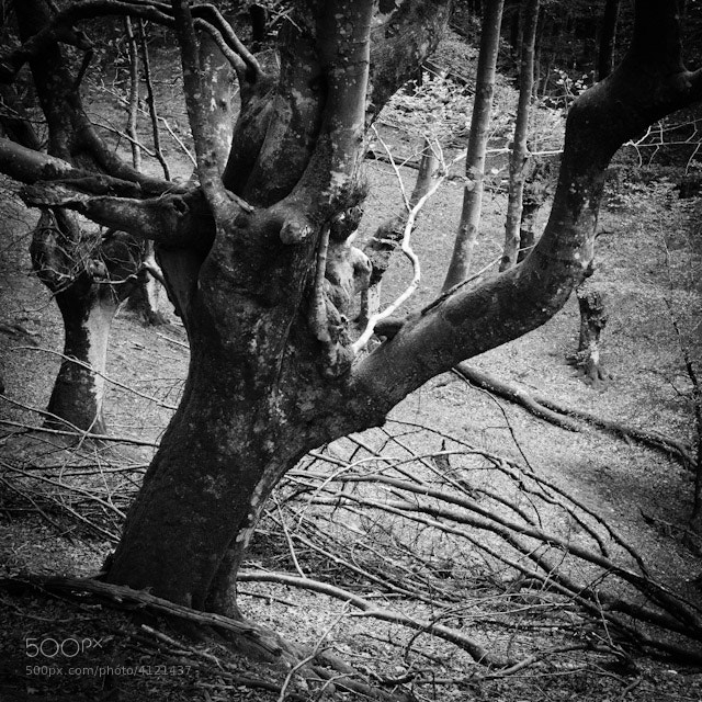 Photograph Old trees by Josep Girona on 500px