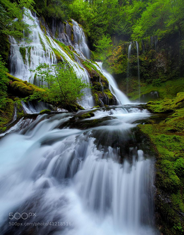 Photograph Nature's Symphony by Jordan Ek on 500px