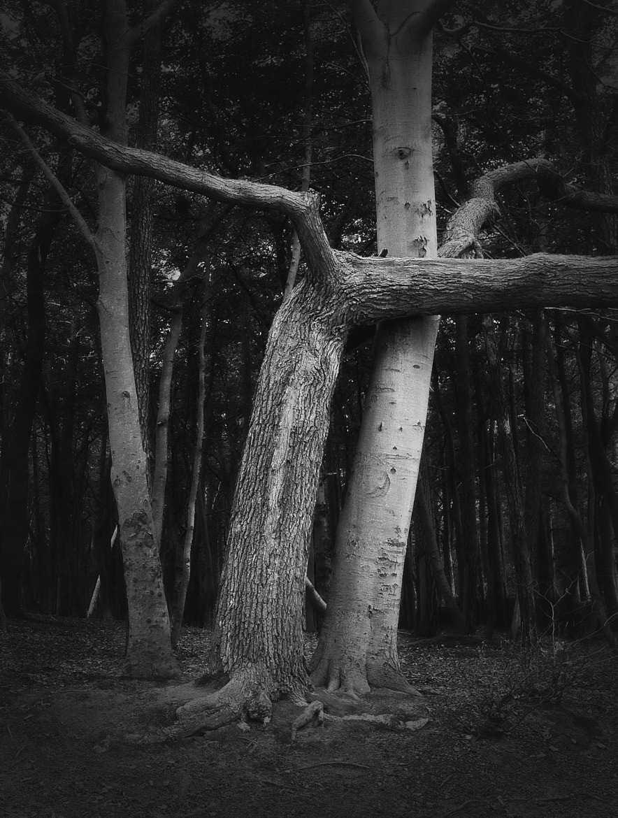 Photograph a tree is a tree, by Martina Roberts on 500px