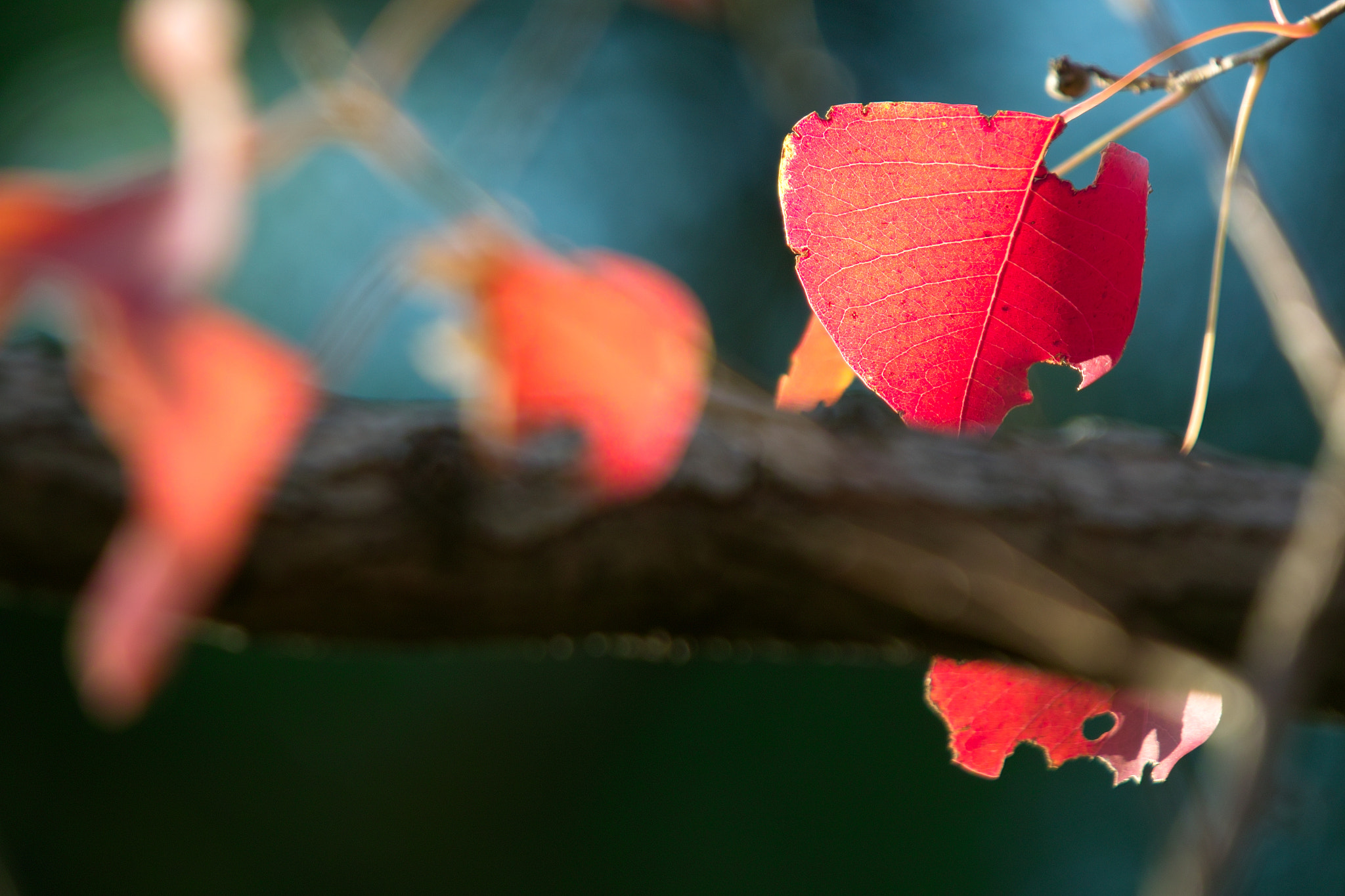 Photograph Autumn Leaves by halfrain X3 on 500px
