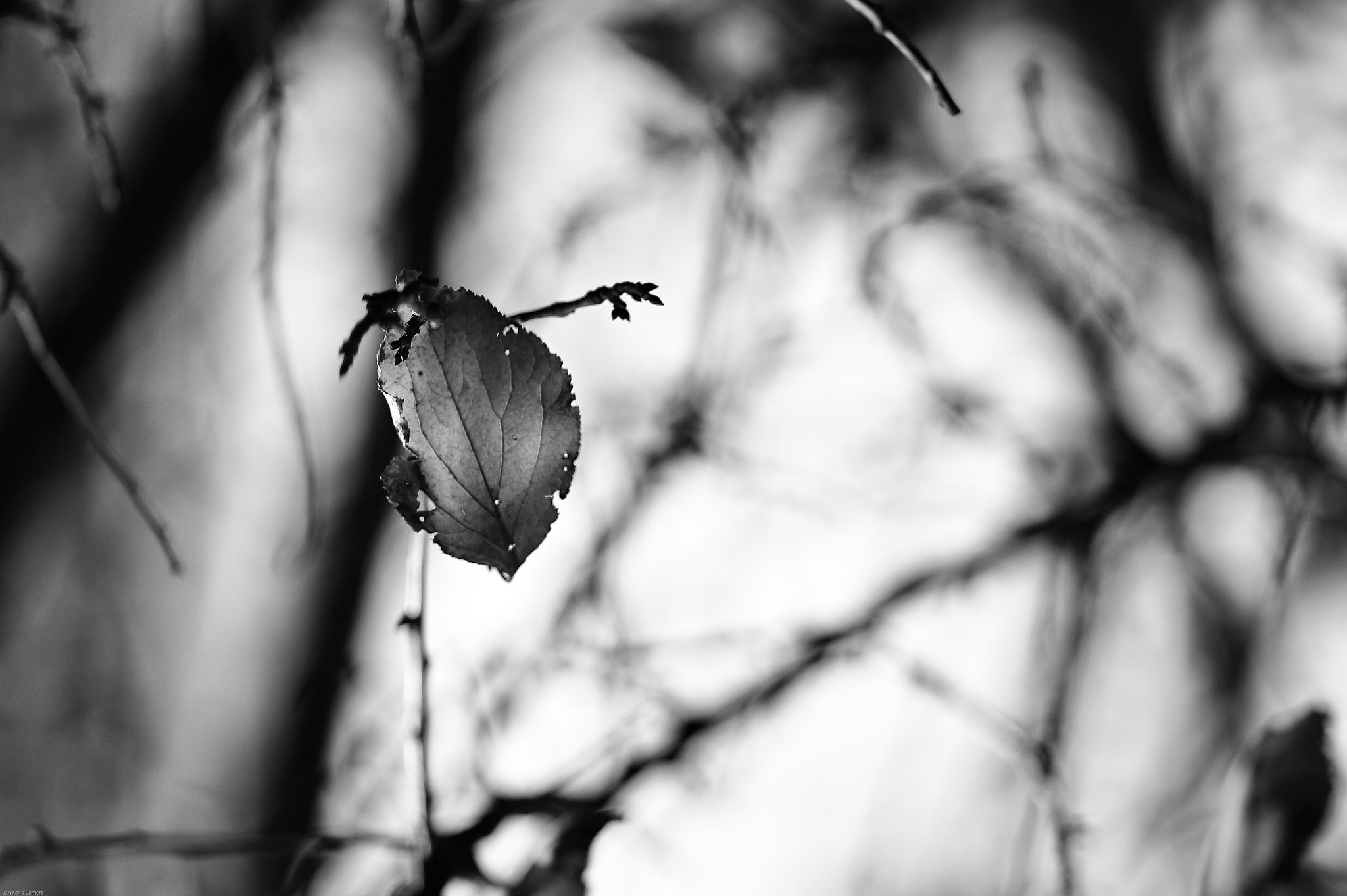 Photograph Hanging On by Jan Karlo on 500px
