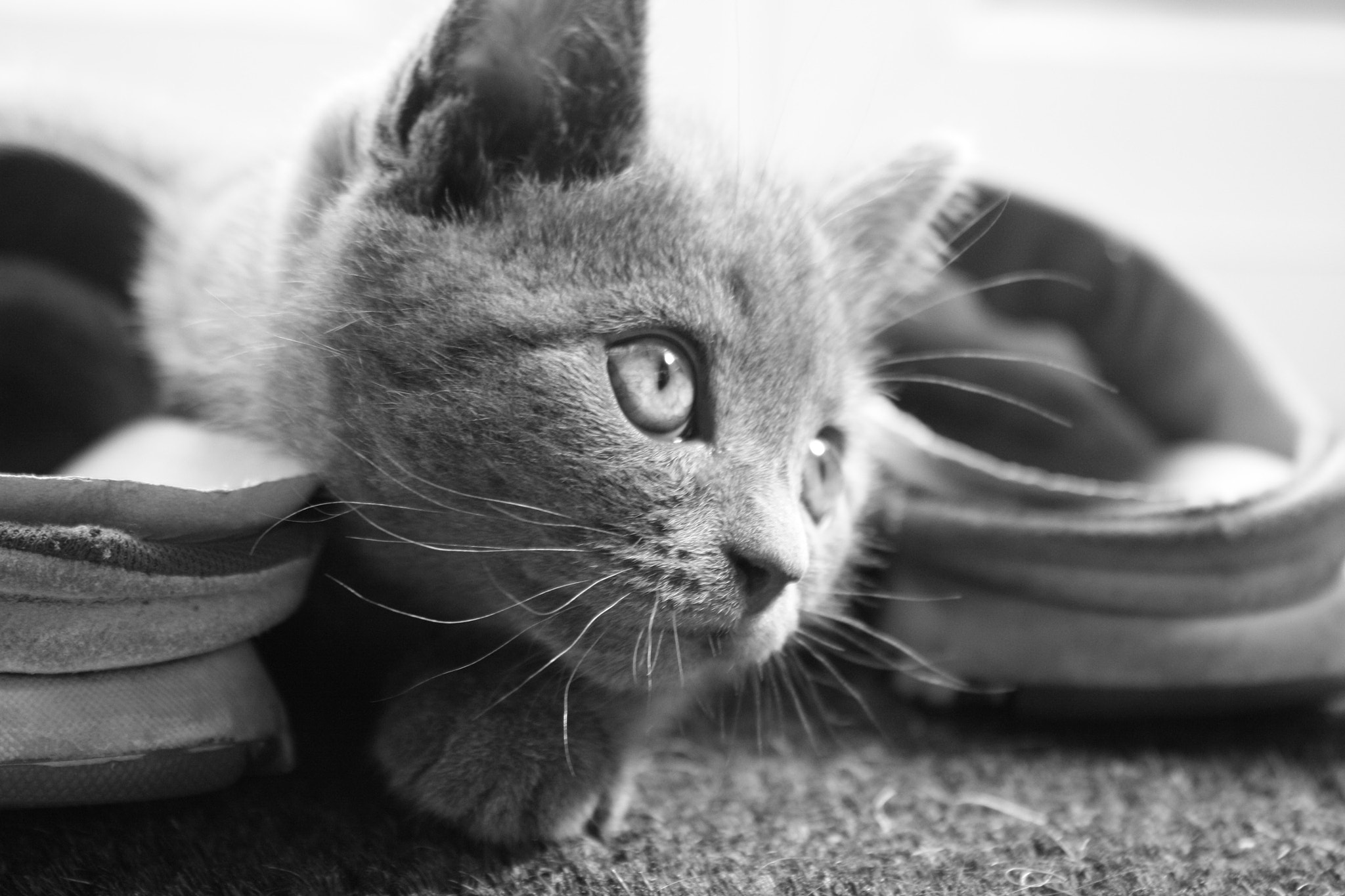 Photograph Its my shoe now by Rose Smith on 500px