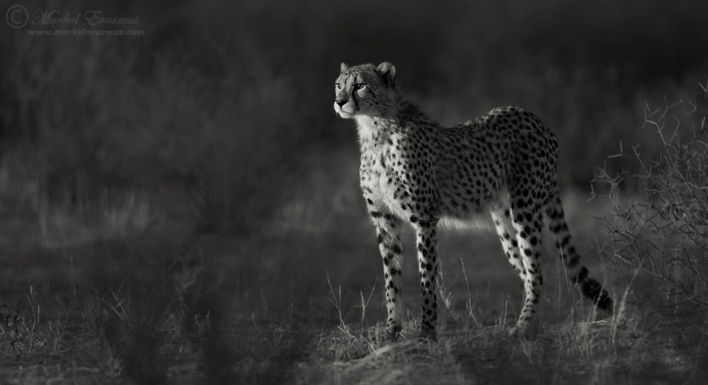 Photograph On the Lookout by Morkel Erasmus on 500px