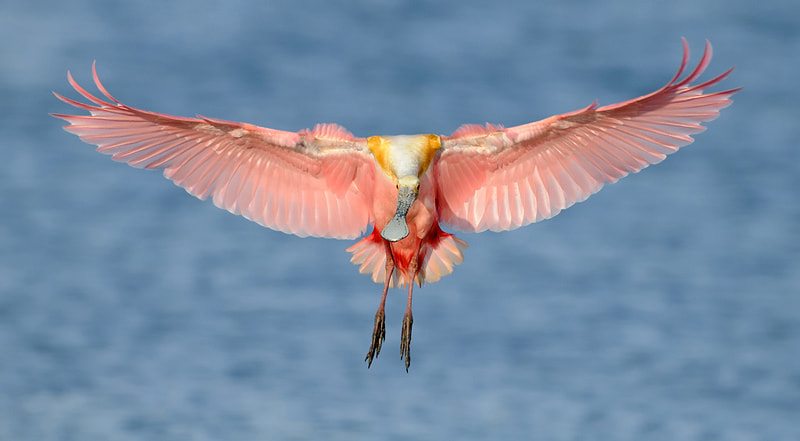 Photograph Wings by James Shadle on 500px