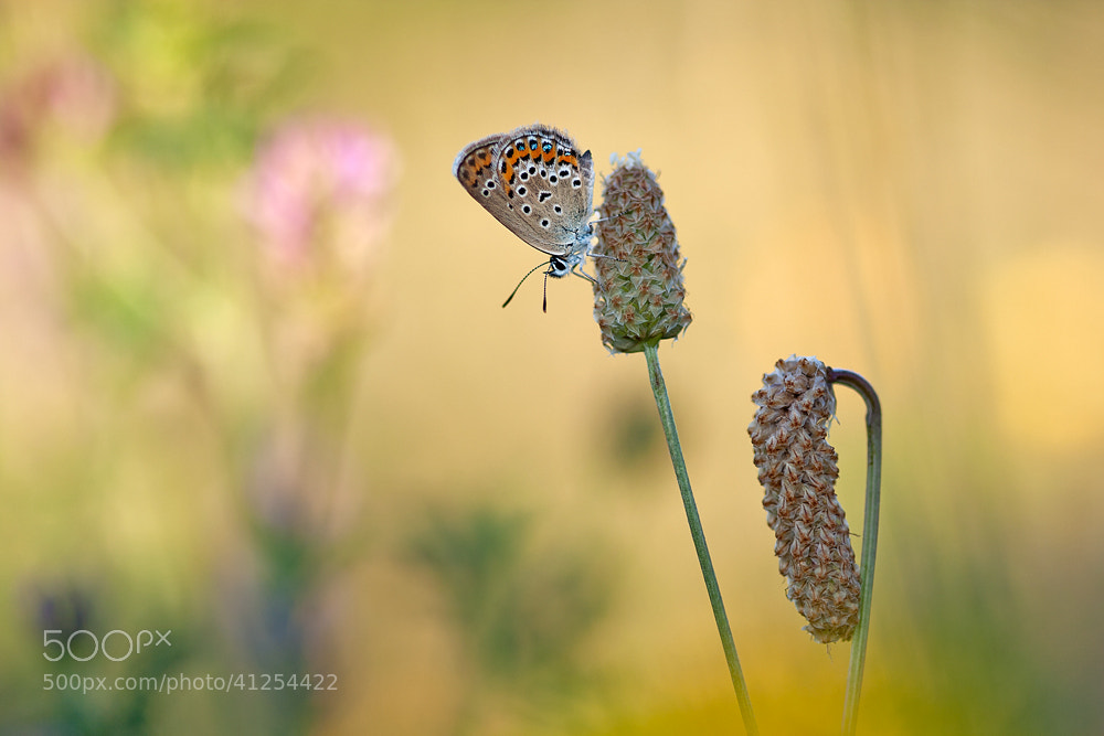 Photograph Morning in the meadow by Péter Koczkás on 500px