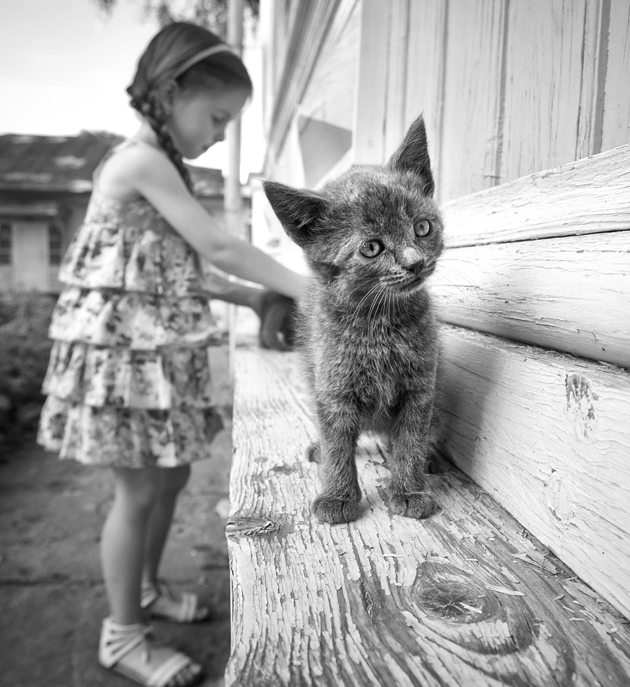 Photograph ....kittens by Anna Kazakova on 500px