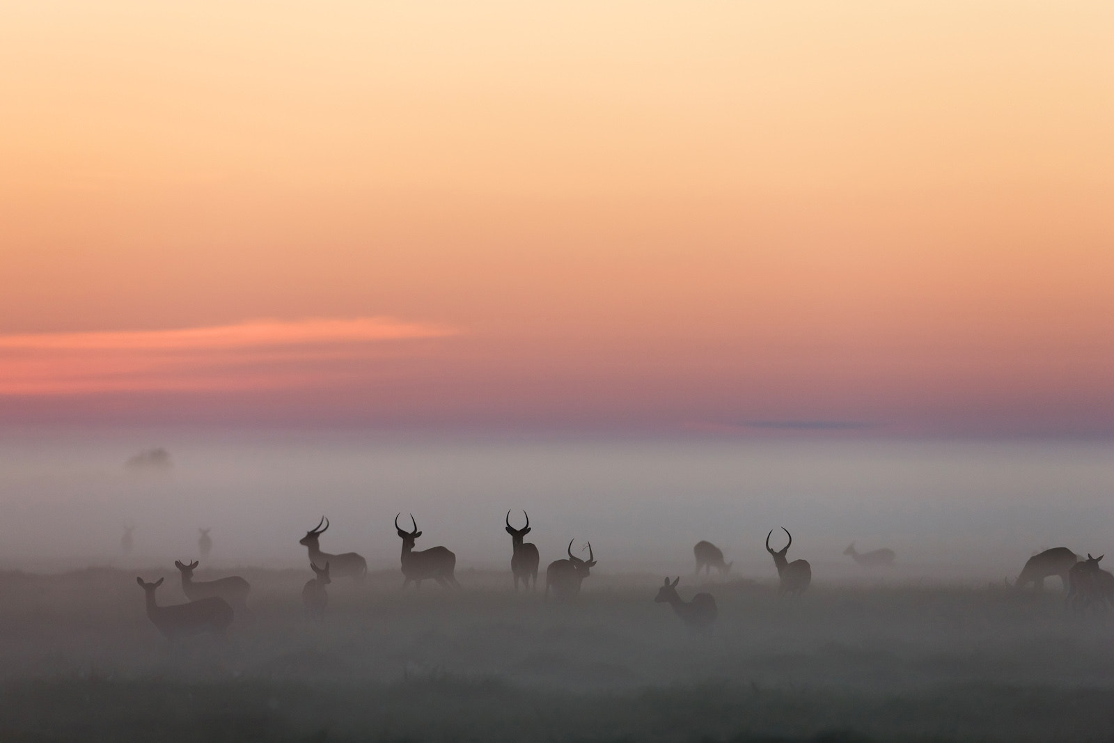 Photograph Morning Mist by Michael Poliza on 500px