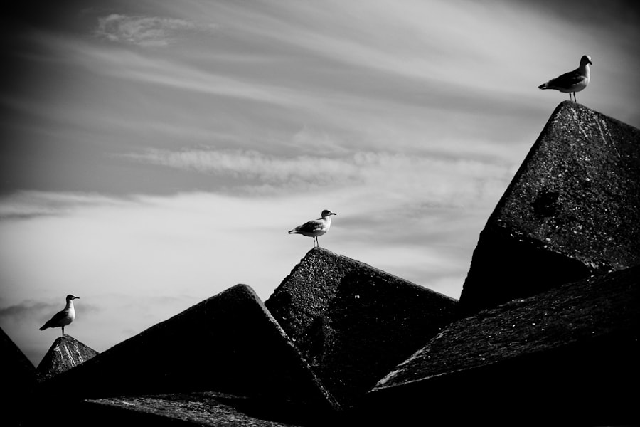Photograph Gulls by Gonçalo Barriga on 500px