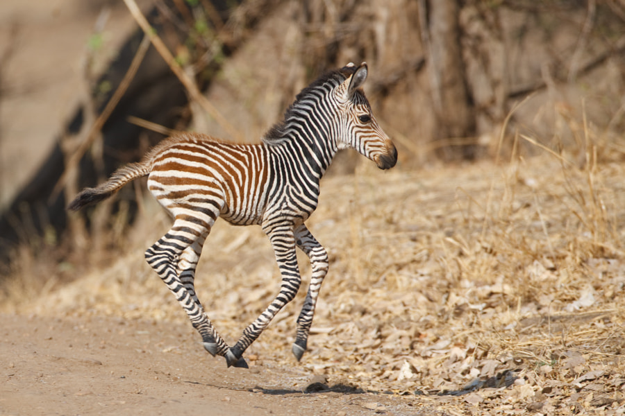 Running Baby by Per-Gunnar Ostby on 500px.com