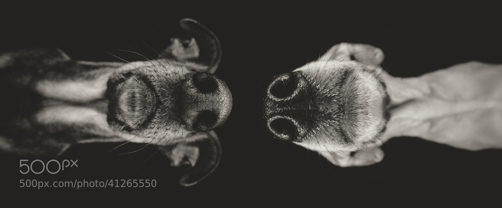 Photograph High Noon by Elke Vogelsang on 500px