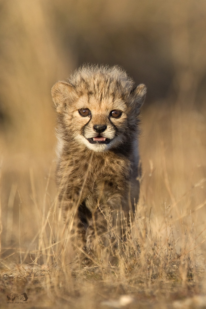 Photograph little scream by Marion Vollborn on 500px