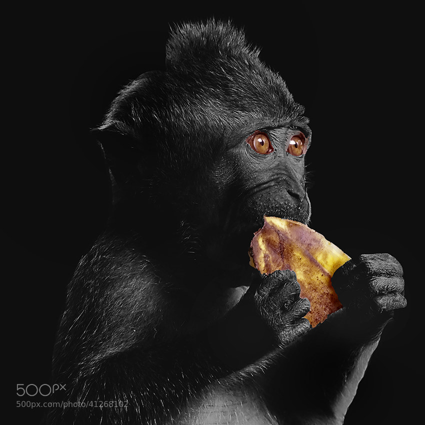 Photograph Mealtime by Prabu dennaga on 500px