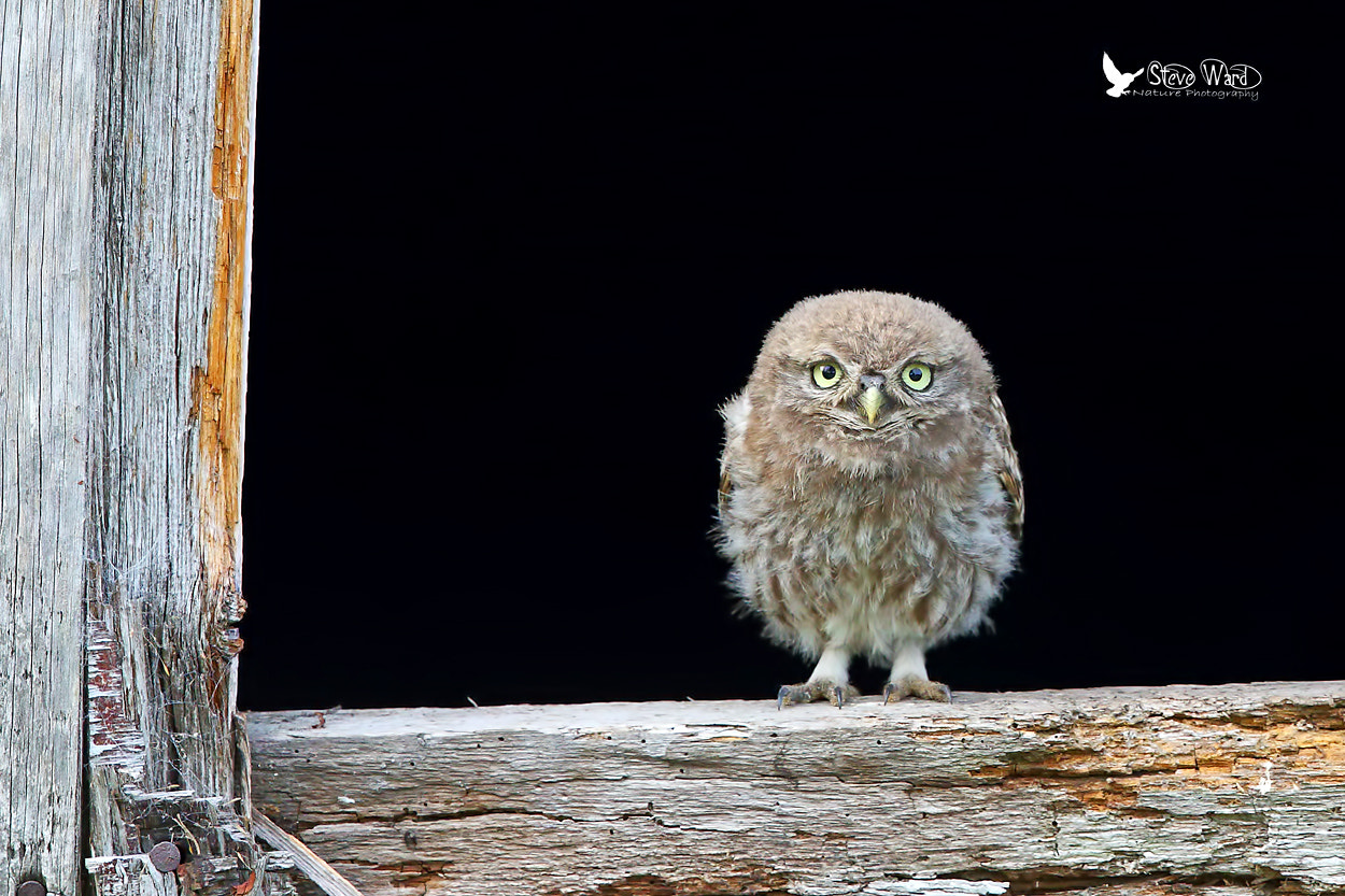 Photograph The epitomy of cuteness by Steven Ward  on 500px