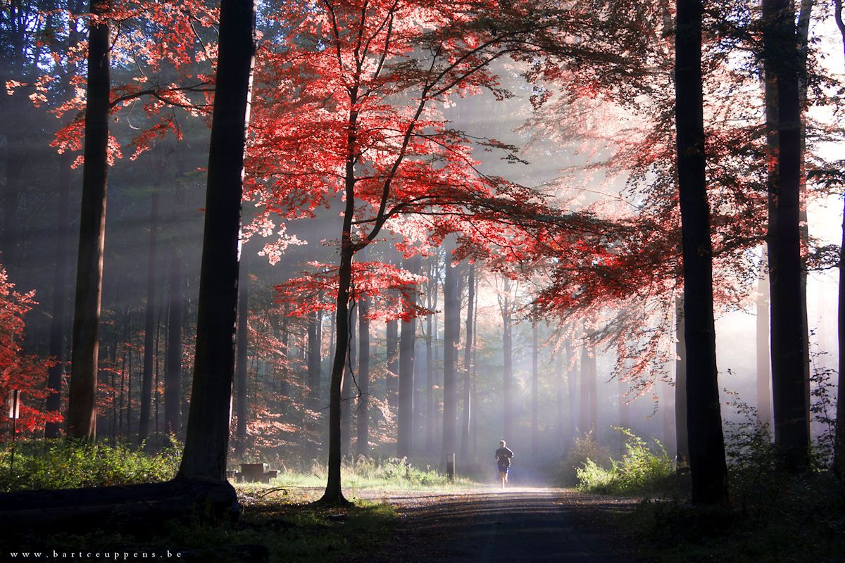 Photograph The beauty of light by Bart Ceuppens on 500px