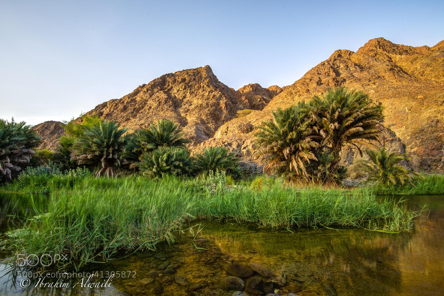 Photograph Oasis - Oman by Ibrahim AlWaili on 500px