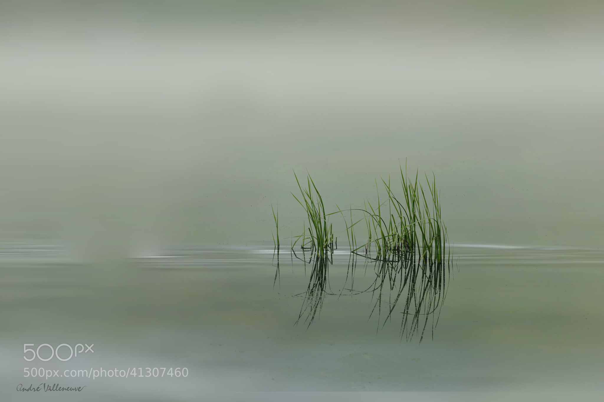 Photograph L'herbage by Andre Villeneuve on 500px