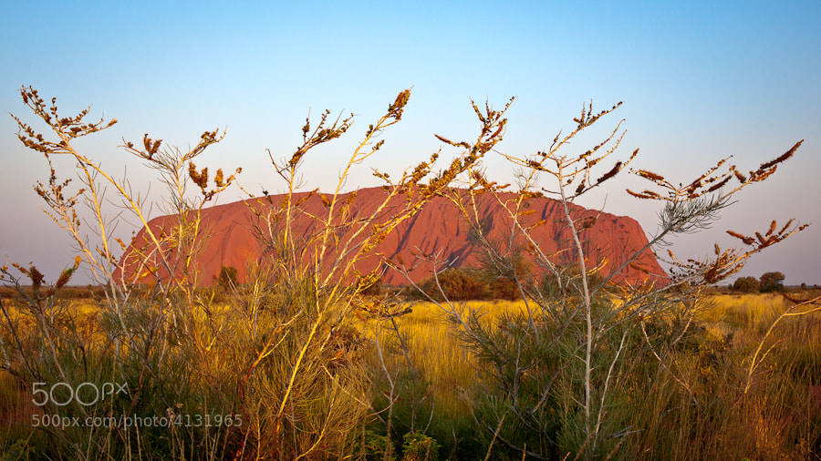 Honey Grovalia are the wildflowers blooming in the foreground