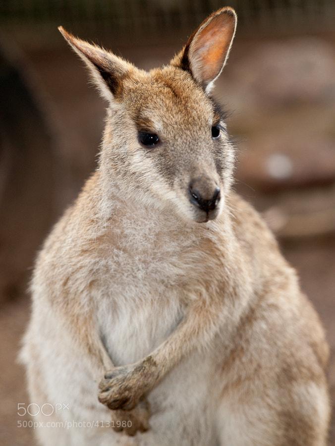 Image taken at Featherdale Wildlife Park