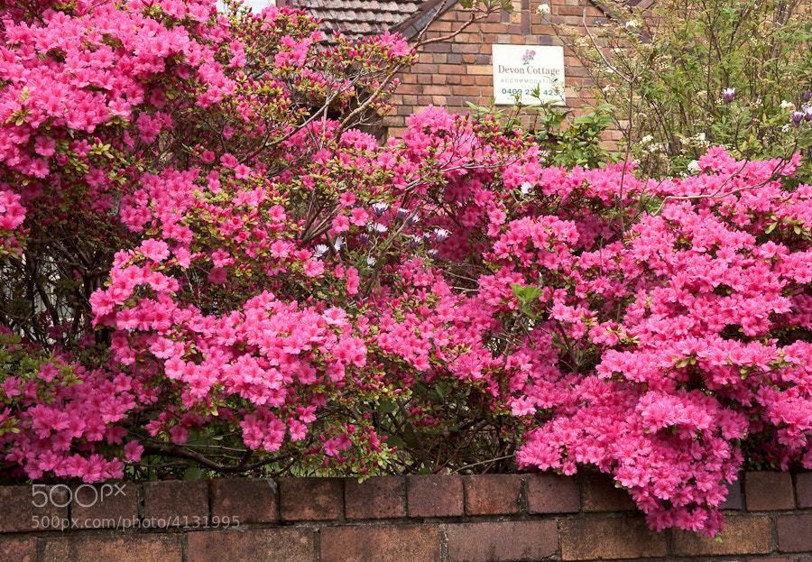 Spring image taken in Katoomba