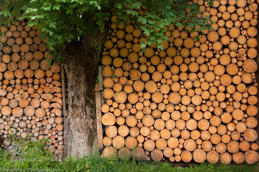Photograph Stuck by Adam Barker/AdamBarkerPhotography.com on 500px