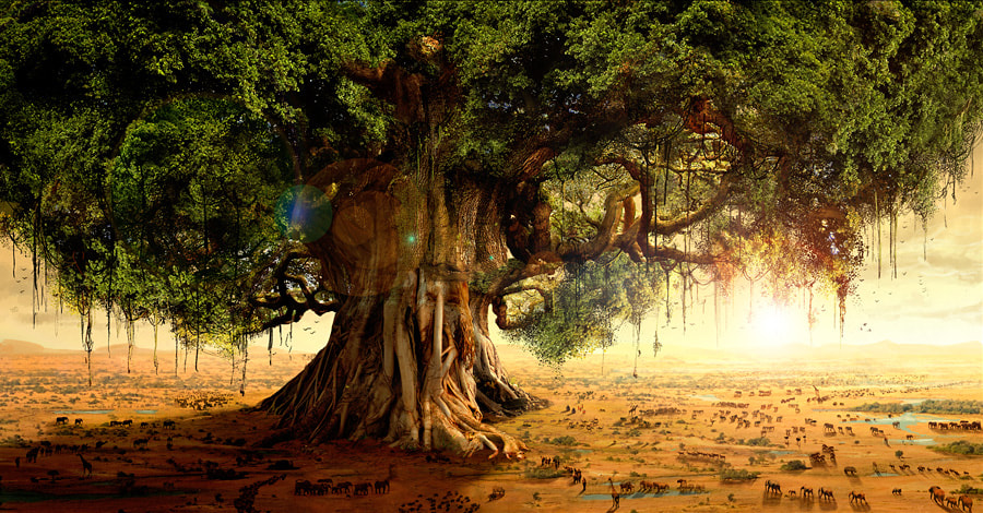 Photograph The Tree of Life by Fabian Oefner on 500px