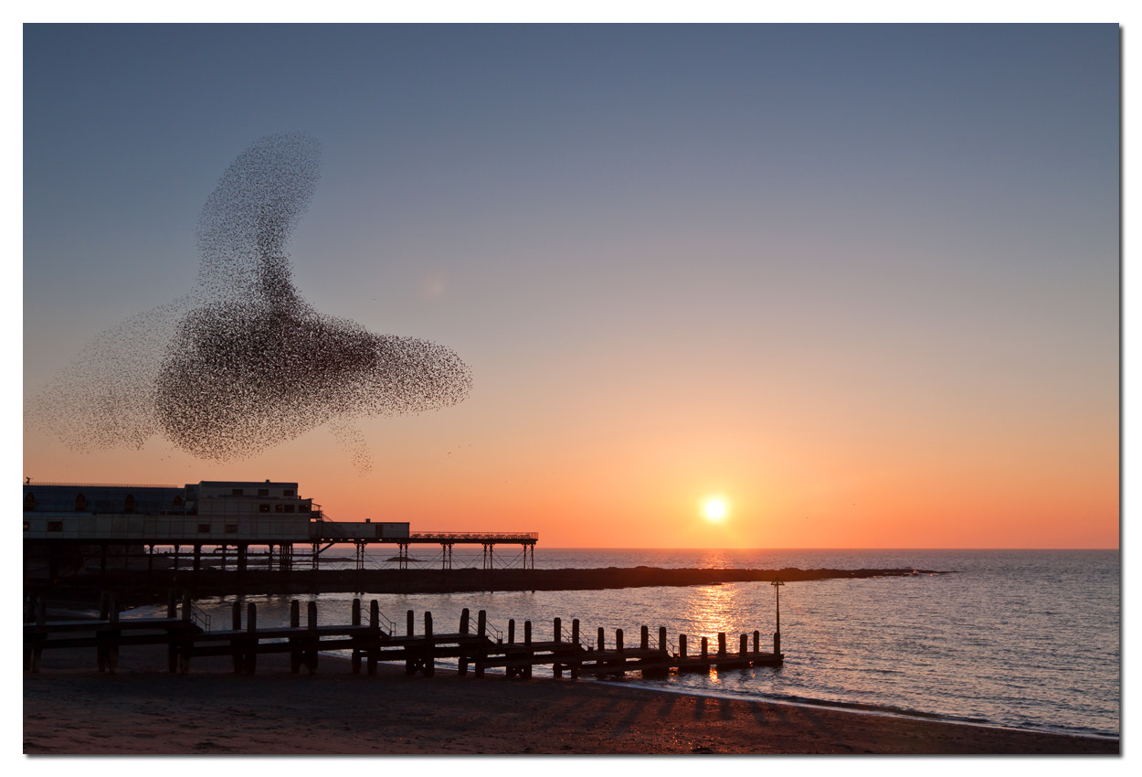 Photograph More starlings! by Si Moore on 500px