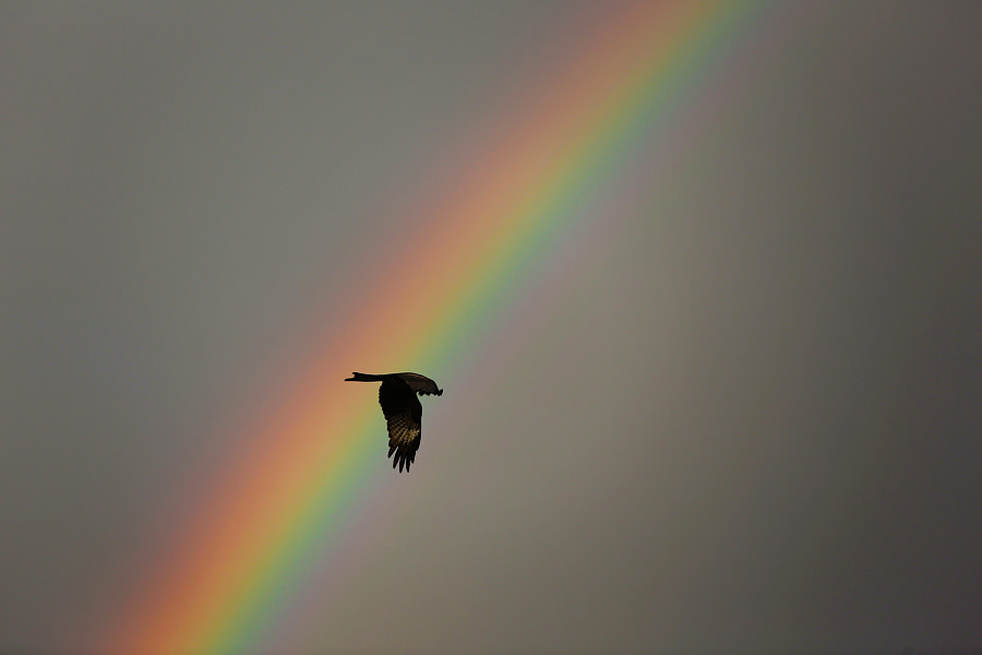 Photograph Кite in the rainbow by Mark Podrabinek on 500px