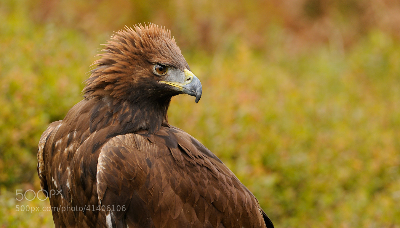 Photograph Golden Autumn by Harry  Eggens on 500px