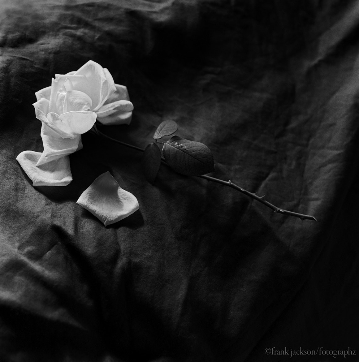 Photograph la rose blanche by Frank  Jackson on 500px