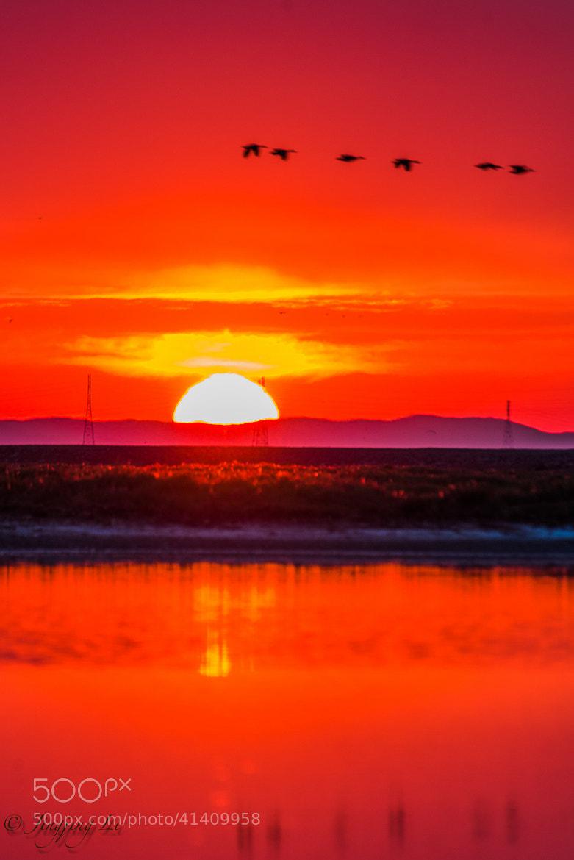 Photograph The RED by Jingjing Li on 500px
