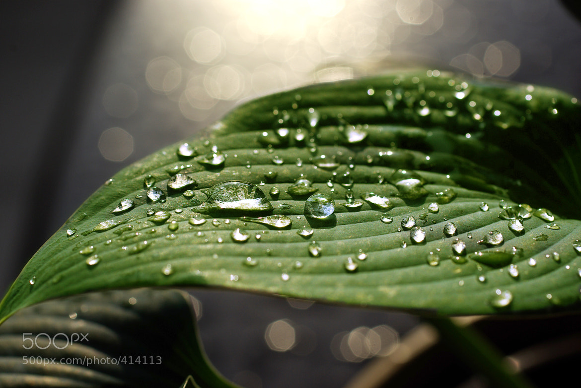 Photograph Shiny Waterdrops on the Green by Tilo Hensel on 500px